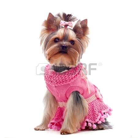 dog dressed up